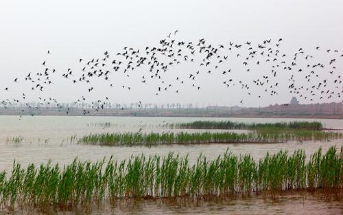 滨州黄河岛湿地公园。