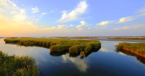 黄河三角洲湿地风光。