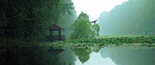 滕州市微山湖湿地红荷风景区。