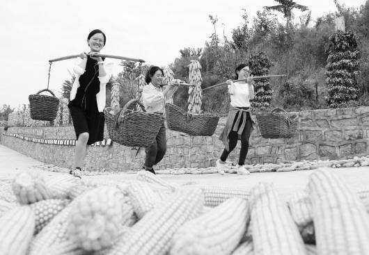 在龙口市七甲镇庙曲家村,游客与村民一起挑担运粮感受丰收的喜悦。(□王世翔 从春龙 张大琪 报道)