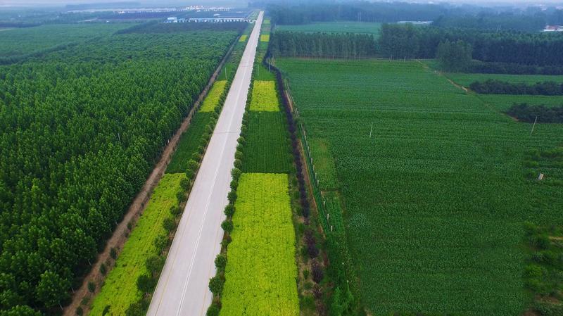园区中的经济林