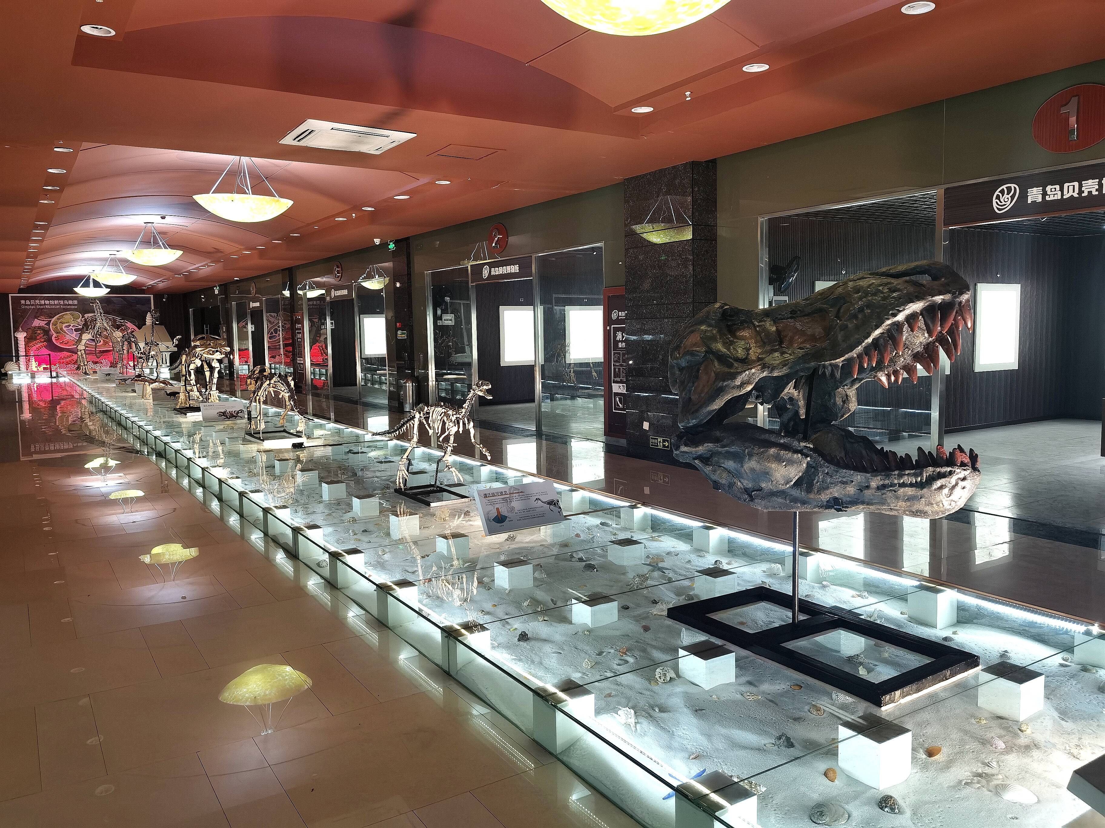 青岛贝壳博物馆沙滩T台上陈列着七种恐龙标本。
