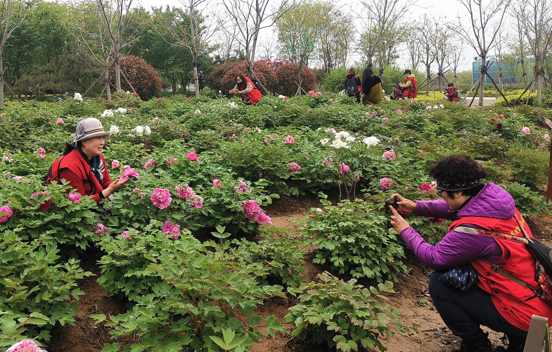 游客在青岛国际牡丹产业园观赏牡丹。记者 李涛 摄