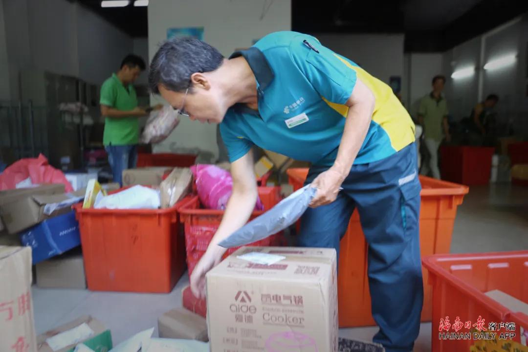 7月25日,投递员卢志强一大早就来到邮政投递站分拣快件。海南日报记者 张茂 摄