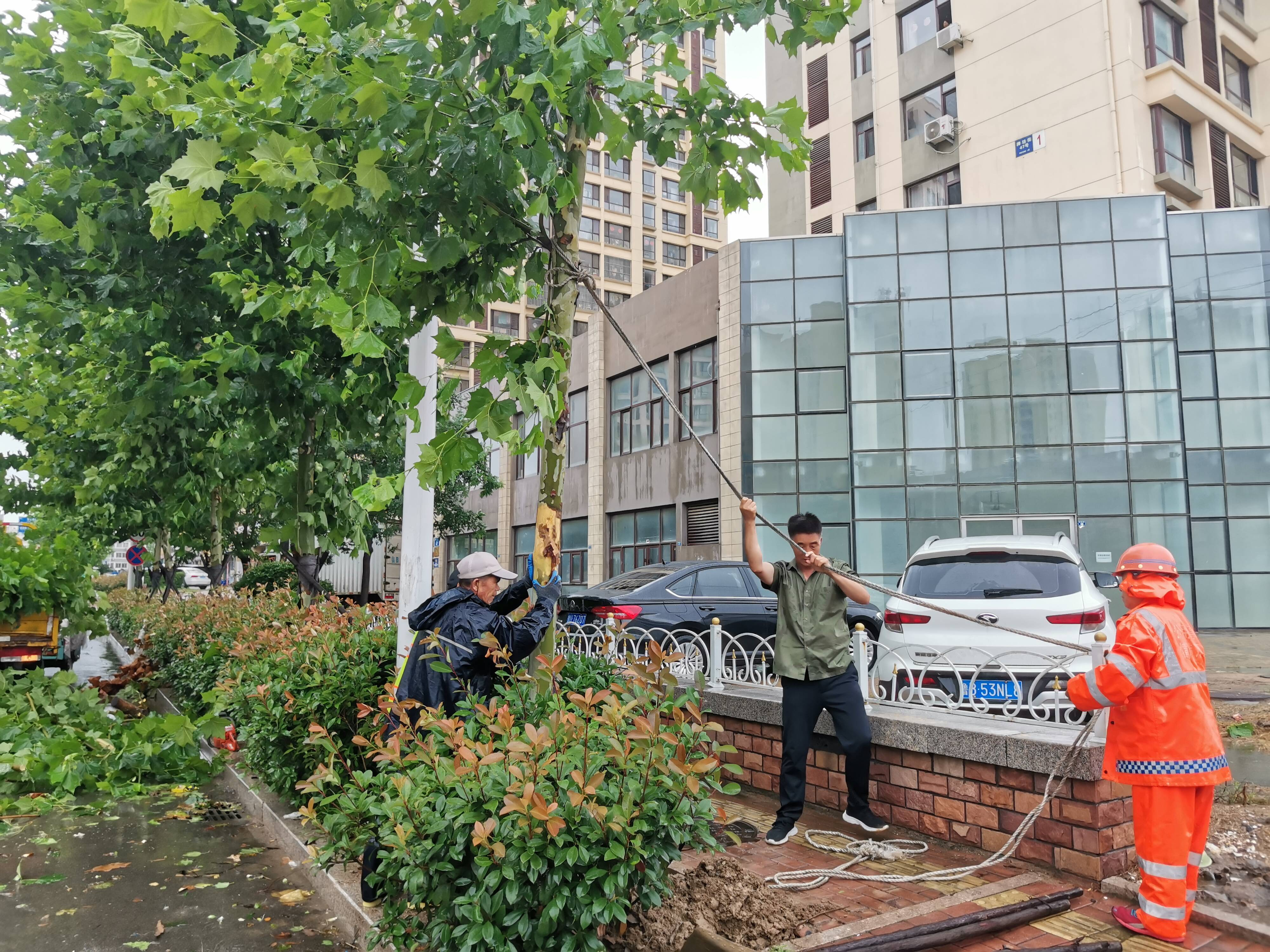 7月29日,新区部分路段出现树木倒伏,西海岸公用事业集团市政管理有限公司迅速组织人员清除倒伏树木并加固支撑倾斜树木。截至29日14时,西海岸公用事业集团处理倒伏、断枝树木94处。记者 张静 报道