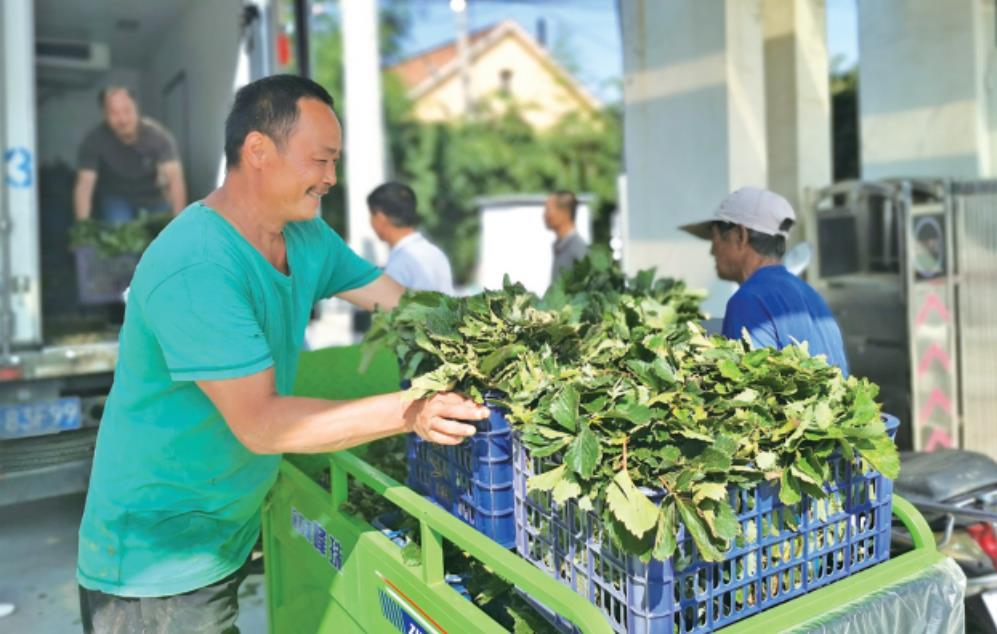 雷家店子股份经济合作社组织种植户领取刚到货的新品种草莓苗。