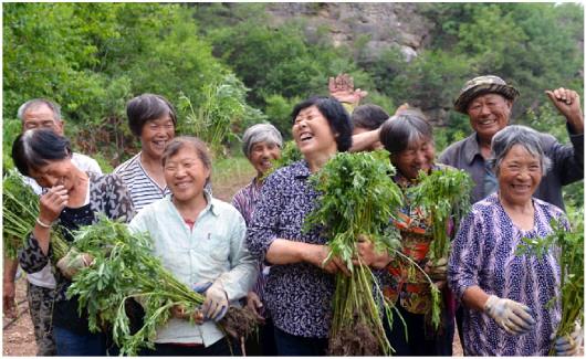 黄昏时分,肖玉爱和村民手捧菊花苗合影,完成了一天劳作的他们露出轻松的微笑。